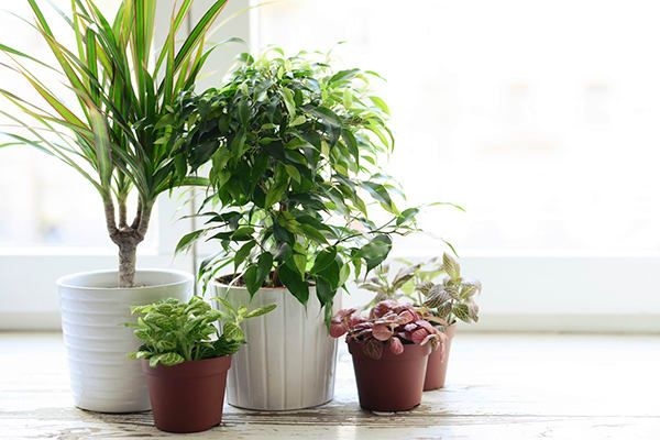 Plantes abordables