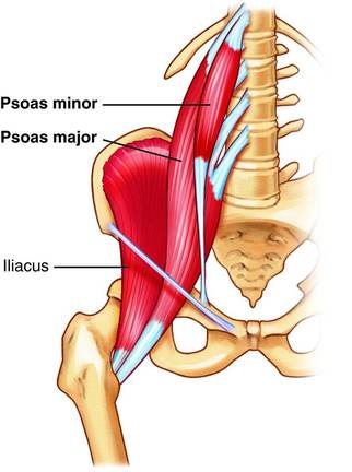 https://www.crossfitinvictus.com/wp-content/uploads/2014/12/psoas_major_and_min.jpg